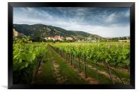 View of Durnstein through vineyards in summer even, Framed Print