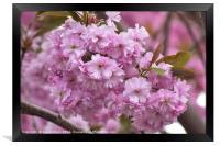 Blossom, Framed Print