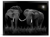 Bull Elephants Compete, Framed Print