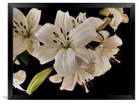 Lilies, Framed Print