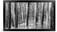PINE RISING, Framed Print