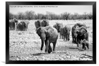 African elephants with young approaching waterhole, Framed Print