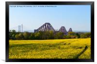 Rapeseed field with three bridges, Framed Print