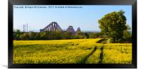 Rapeseed field with three bridges panoramic, Framed Print
