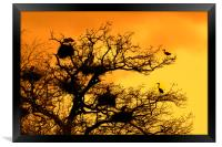 Heronry at Sunset, Framed Print