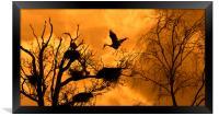 Heron Rookery at Sunset, Framed Print