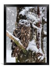 Eagle Owl in Snowstorm, Framed Print