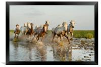 Mares and Foals in the Marshes, Framed Print