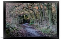 Simply a path, Framed Print
