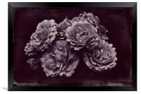 ROSA REMEMBRANCE, Framed Print