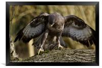 Don't look at me dude! , Framed Print