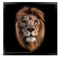 Lion portrait, Framed Print