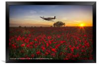 Spitfire over a field of poppies., Framed Print