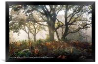 Mysterious Forest  , Framed Print