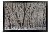 Wintertime, Framed Print