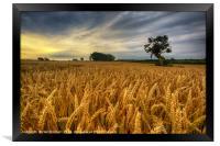 Barley Field at Tythegston, Framed Print