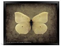 Vintage Butterfly, Framed Print