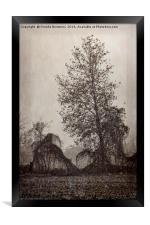 barren tree in the fog , Framed Print