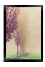 field in the fog, Framed Print