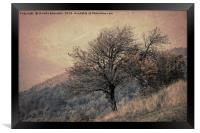tree on mountain in the autumn mist, Framed Print
