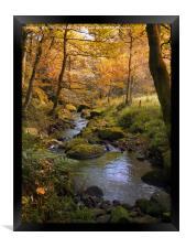 golden autumn woodland and stream, Framed Print