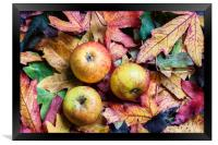 Apples on autumn leaves., Framed Print