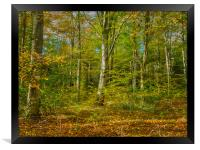 Autumn Colours, Framed Print