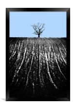 single tree in field, Framed Print