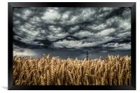 Wheat Field Thunder Storm, Framed Print