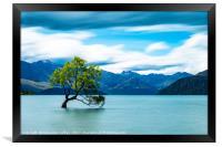 Lone Tree, Lake Wanaka, New Zealand, Framed Print