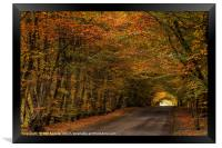 Autumn Colours, Framed Print