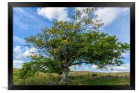 A tree in the Cairngorms National Park, Framed Print