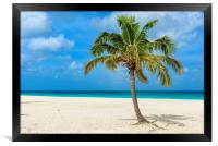Palm tree alone on the white sand of the Eagle Bea, Framed Print