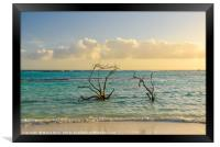Dried branches emerge from the Carribean sea of Ar, Framed Print