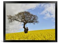 Old Tree in Rapeseed Field., Framed Print