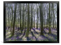 Shadows in the Trees, Framed Print