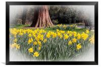 Daffodils and a Park Bench, Framed Print