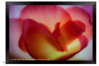 Begonia in Abstract, Framed Print