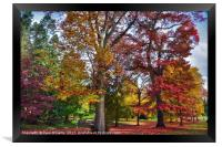Autumnal colours in Virginia Water Lake     , Framed Print