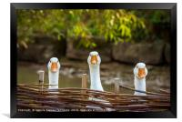 Three funny white geese, Framed Print