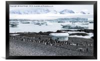 Penguins and icebergs, Framed Print
