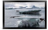 Adelie penguin on ice, Framed Print
