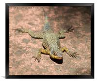 Lizard at Iguazu Falls, Argentina, Framed Print