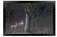 3 common fallow deers and 2 Melanistic Black deers, Framed Print