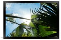 Lush tropical palm tree looking up perspective, Framed Print