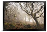 Fairy woodland in Rhymney Valley, Framed Print