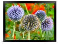 Wild Violet Blue Flowers in Norfolk, Framed Print