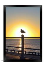 Seagull Sunrise, Framed Print