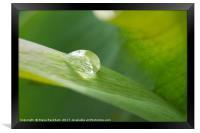 Raindrop On Leaf, Framed Print