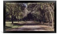 Road between the trees, Framed Print